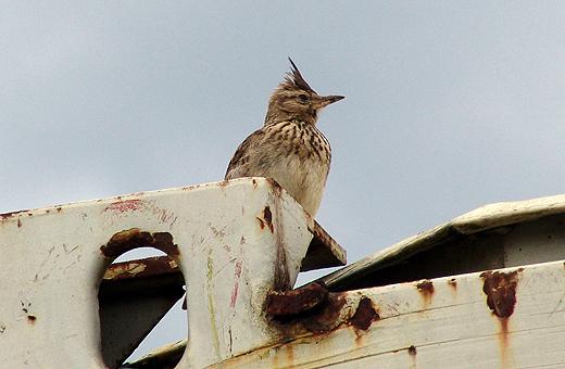 Seit ein paar Wochen wimmelt es nur so vor Vögel auf der Baustelle.