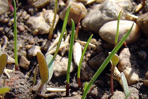 In der Nahaufnahme sieht es aus als hätten wir Felsen im Garten. Das Schotter-Erde-Gemisch ist nur provisorisch für diesen Sommer. Kommendes Jahr wird der Garten im Zuge der Umzäunung ohnehin komplett neu gestaltet.