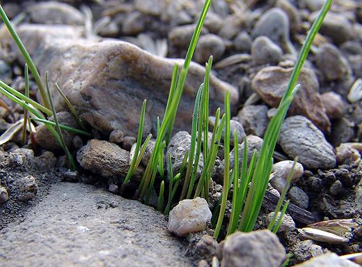"""Das sieht schon aus wie Gras. Ich bin schon neugierig, welchen Wachstumsschub die kommende """"nasse"""" Woche bringen wird."""