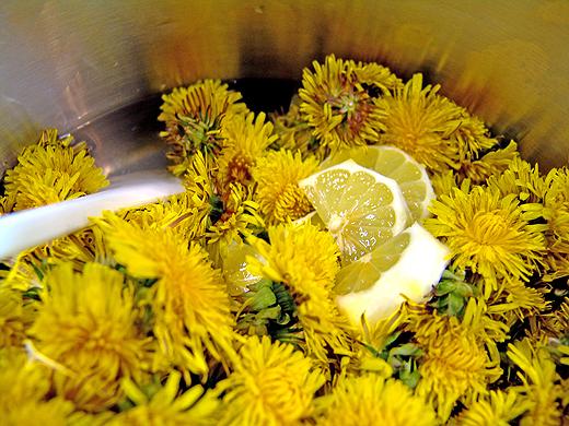 Die Löwenzahnblüten und die Zitrone (nicht die Schalen) in kaltem Wasser ansetzten und dann einmal aufkochen. Den Sud dann langsam abkühlen lassen.