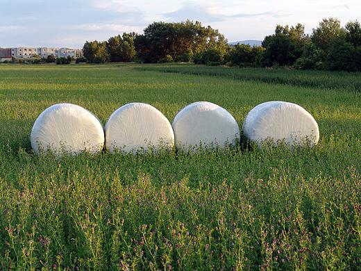 Rund um unser Haus herrscht rege Landwirtschaft.