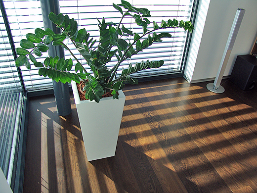 Das Lichtspiel auf dem Parkett, das lebendige Grün der Glücksfeder (lat. Zamioculcas) und der wohlig warme Wohnzimmerboden laden zum Entspannen ein.