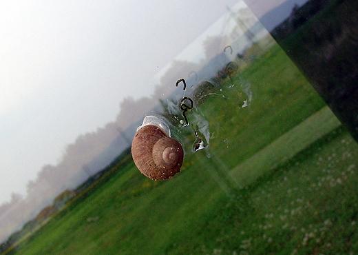 Bei dem zur Zeit herrschenten Regenwetter 'verirren' sich einige Schnecken auf die bodentiefen Verglasungen. Aber zum Glück nur an der Ostseite wo Schotter bis zur unteren Verblechung liegt. Jürgen freut sich schon wieder auf das Fensterputzen - macht er ja so gerne ;-) .